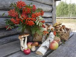 Именно поздней осенью появляется большой и богатый выбор грибов